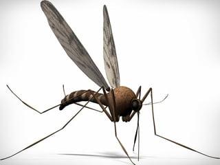 Zaprasivanje komaraca avionom