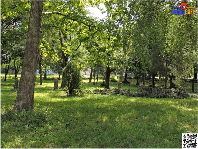 Park OS Jovan Popovic isecena stabla